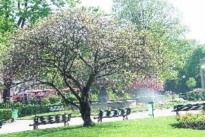 シャンゼリゼの小さな公園